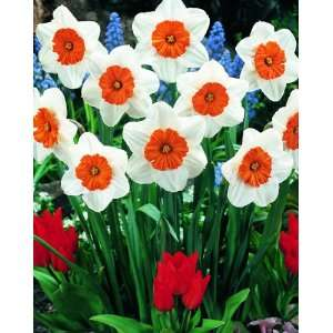 Professor Einstein Flower Bulbs   6 Bulbs: Patio, Lawn & Garden